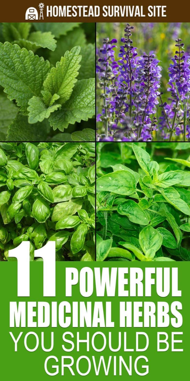 11 Powerful Medicinal Herbs You Should Be Growing With Images