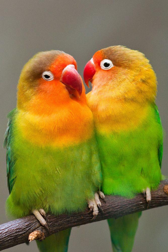 Die beliebtesten Videos von Tag: lea lovebird