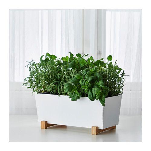 Kitchen Bench Herb Garden: BITTERGURKA Plant Pot, White