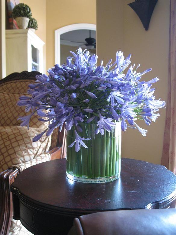 Agapanthus 019small Flower Arrangements Agapanthus Table Flowers