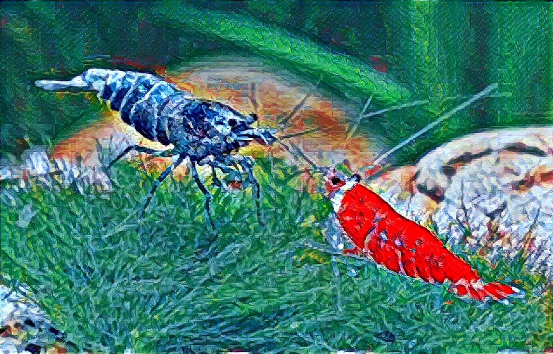 1c0998a68d30633467716bb24164d2e2 Luxe De Crevette Aquarium Des Idées