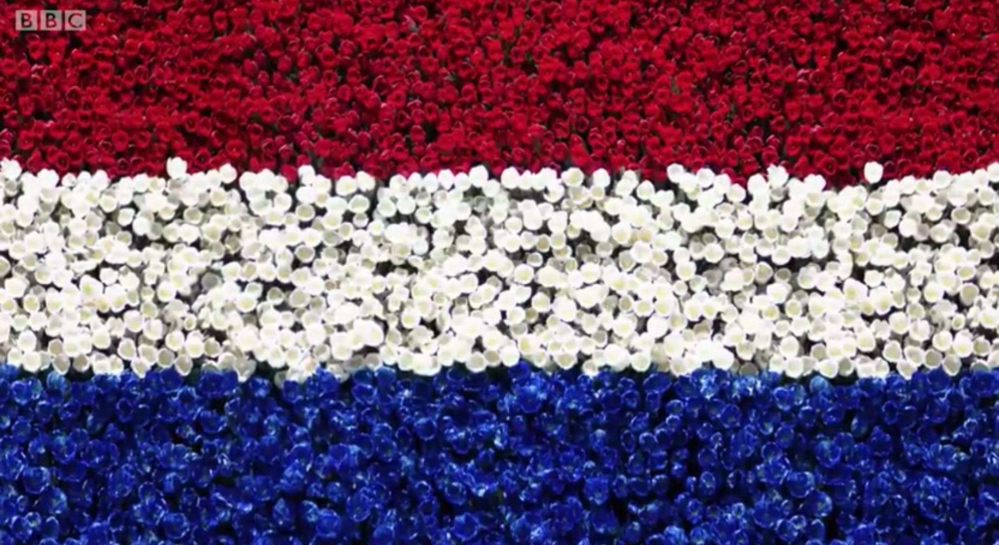 eurovision song contest 2014 the netherlands flag art eurovision