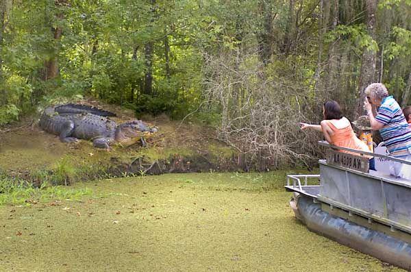 Swamp Tours Houma