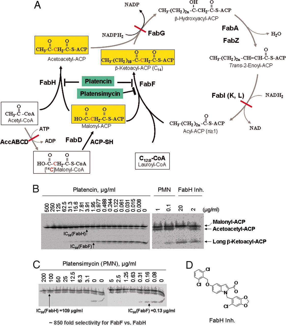 Tj in molecular biology beta ketoacyl acp synthase ec 23141 is molecular biology fandeluxe Gallery