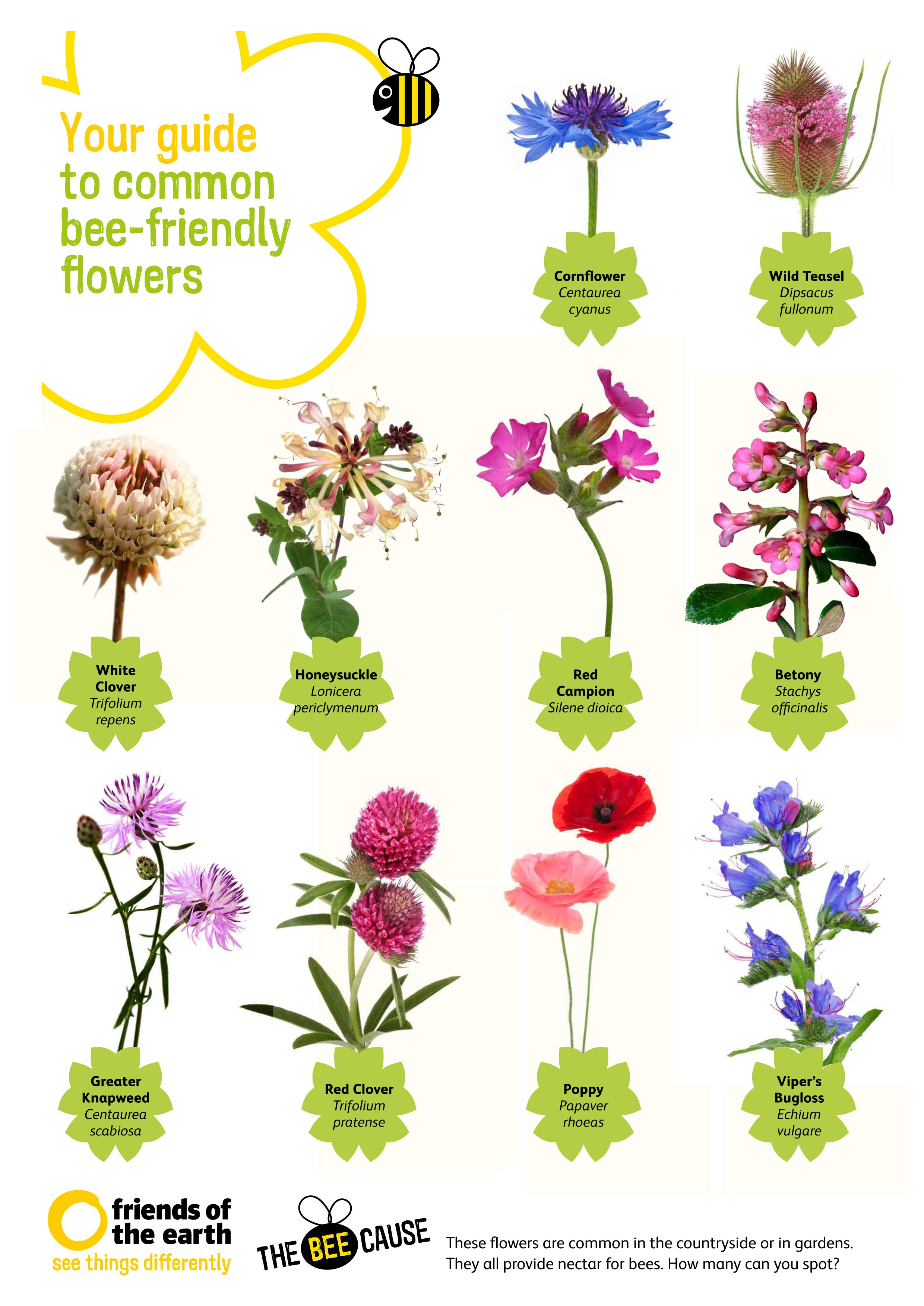 Your Guide to Common Bee friendly Flowers Download our