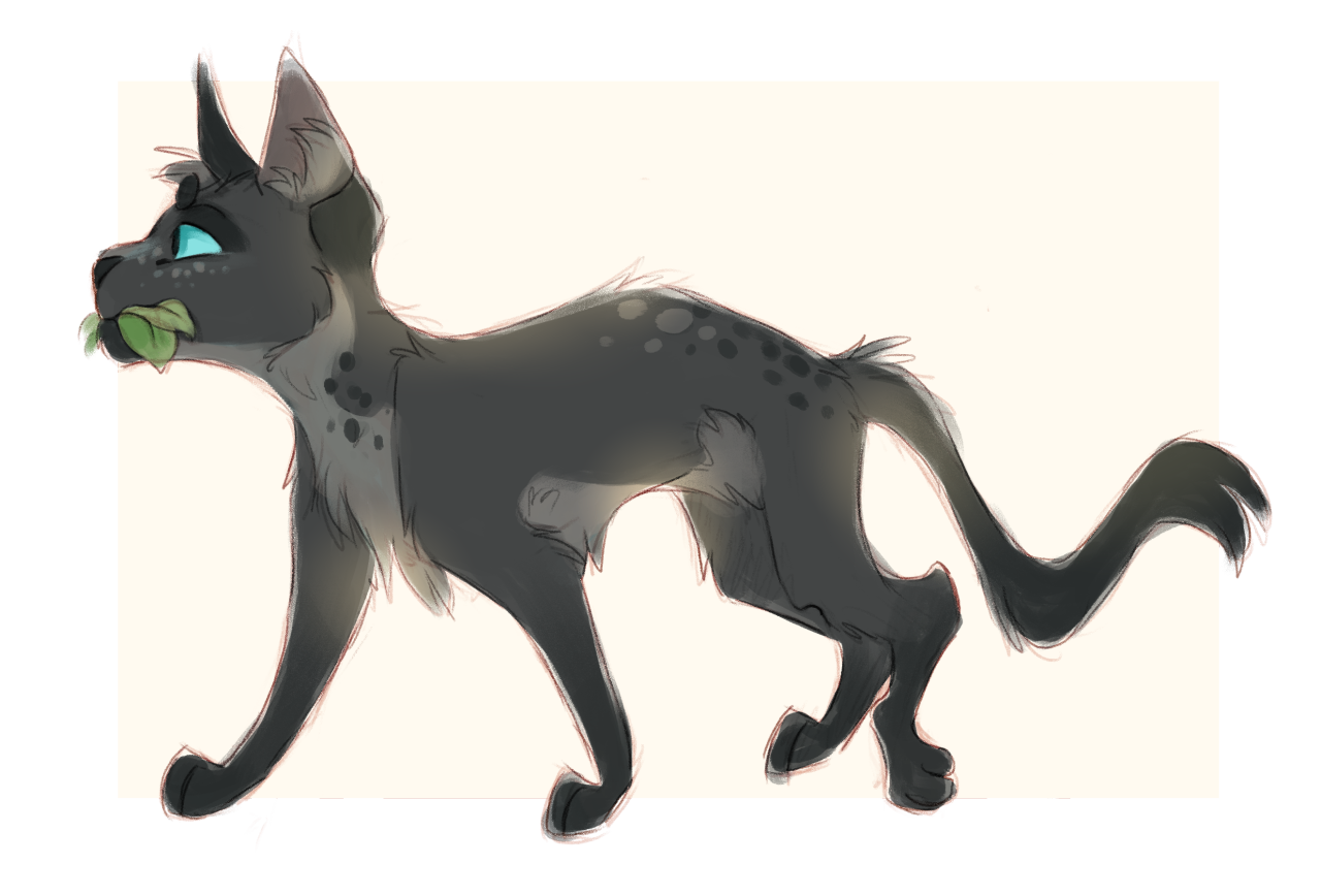 Cinderpelt By Finchwing Misc Art Pinterest