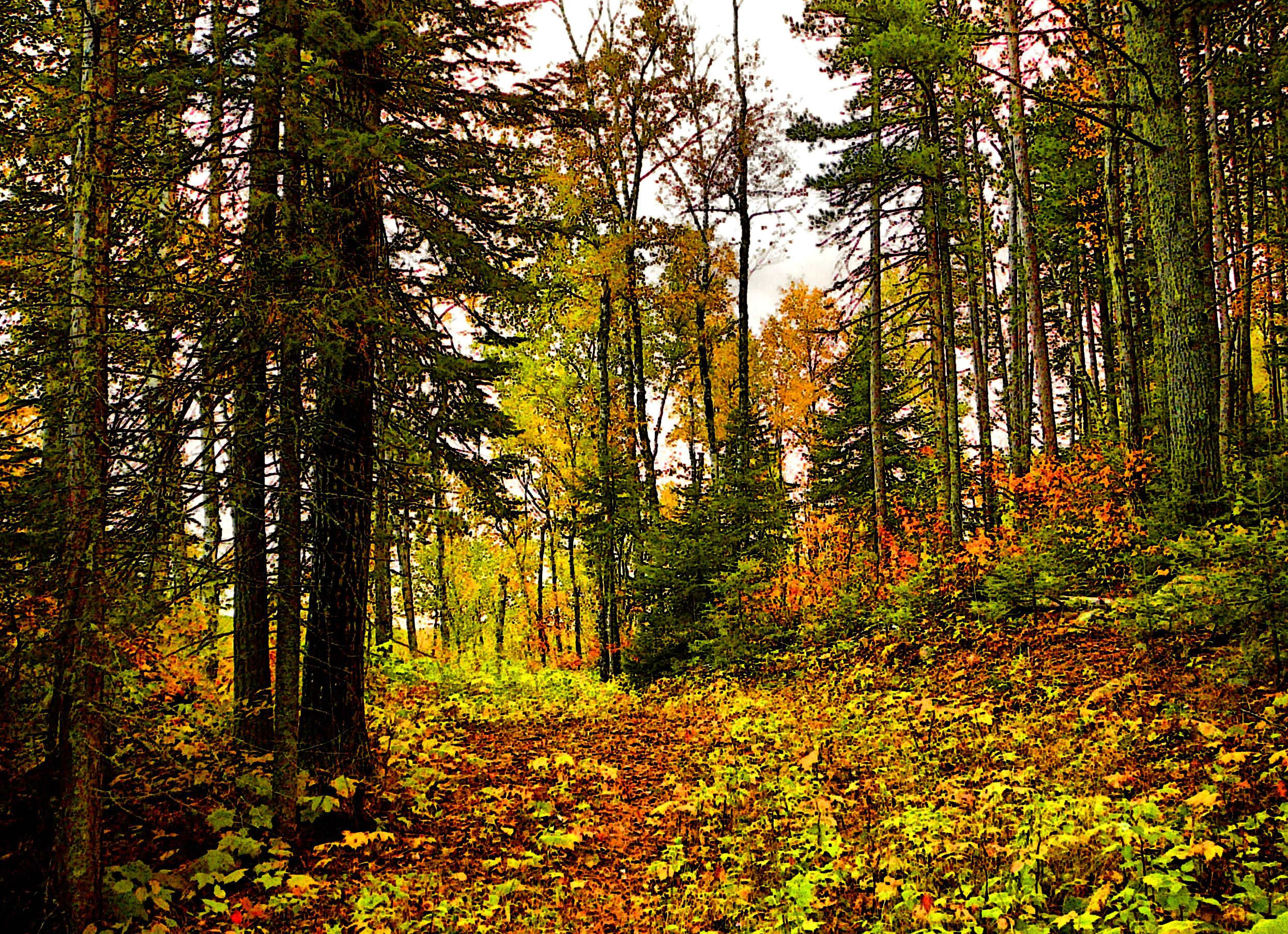 Hiking in the fall at Bearskin Lodge on the Gunflint Trail