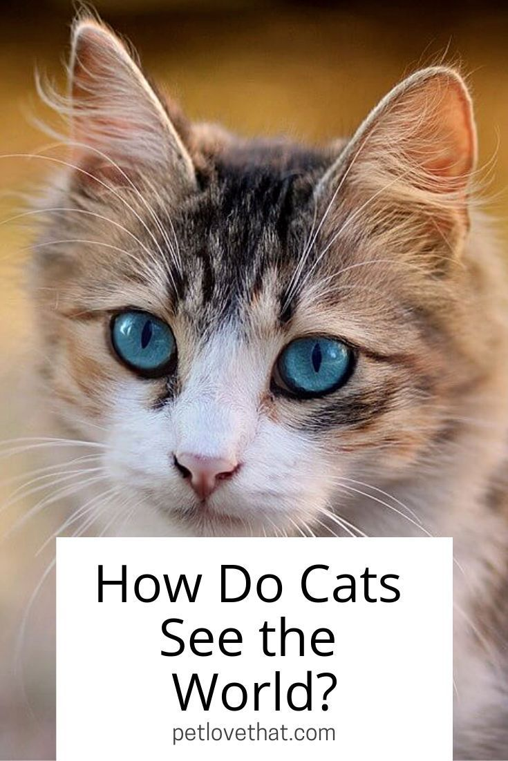 How Do Cats See the World Cats, Cat run