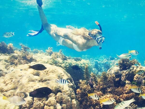 Explore the ocean. Go snorkeling on Buck Island near St. Croix.