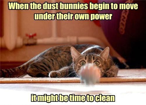 Only 10 Days Left To Schedule Your Spring Cleaning With A Discount Greensboronc Winstonsalemnc Kerne Funny Cat Captions Funny Cat Memes Funny Cat Pictures