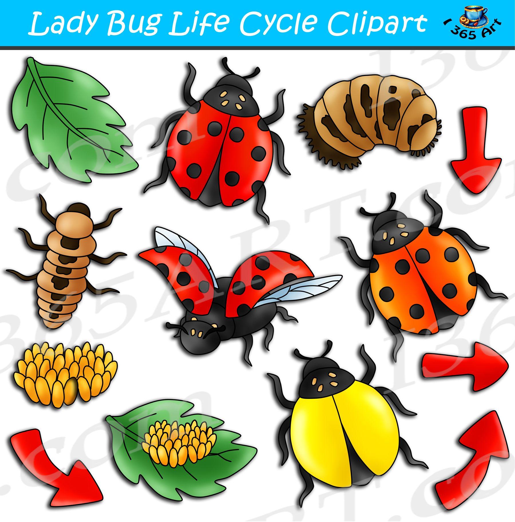 Ladybug Life Cycle Clipart Bundle