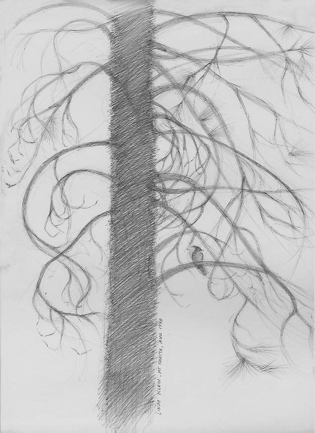 linda hufferd the blue jay and the pine tree pen drawing