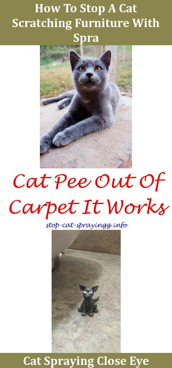 Remove Carpet Odor