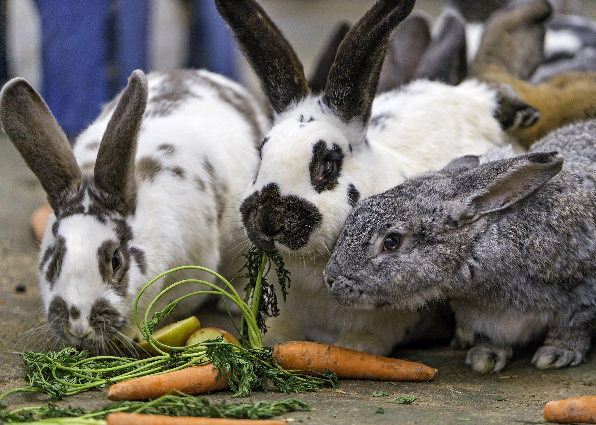Кролик кушает картинка