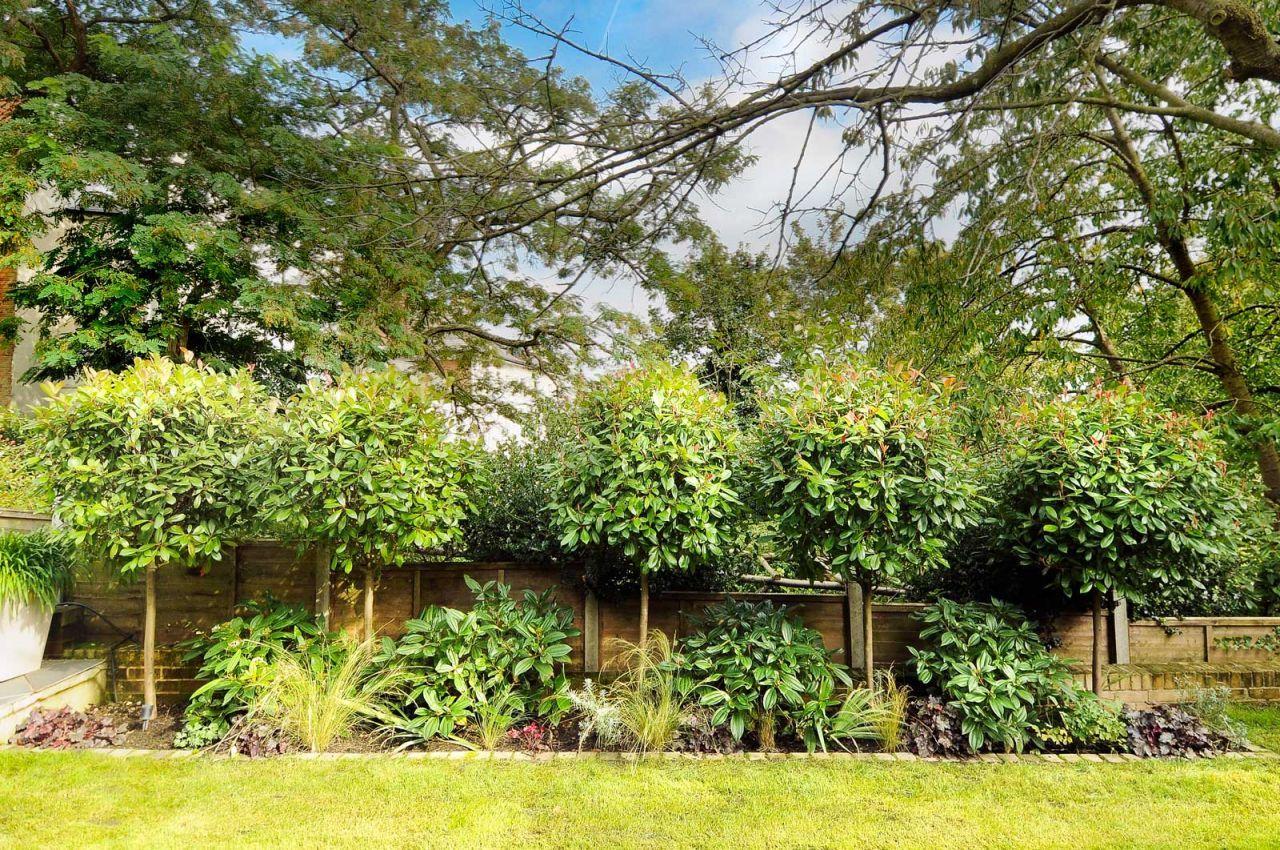 Garden Design In Crystal Palace South East London Privacy Landscaping Back Garden Design Garden Design