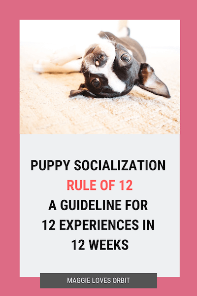 Puppy Socialization Rule Of 12 Puppy Socialization Puppy Training Dog Training