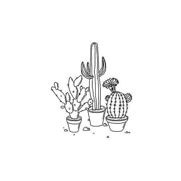 Drawing of a cactus