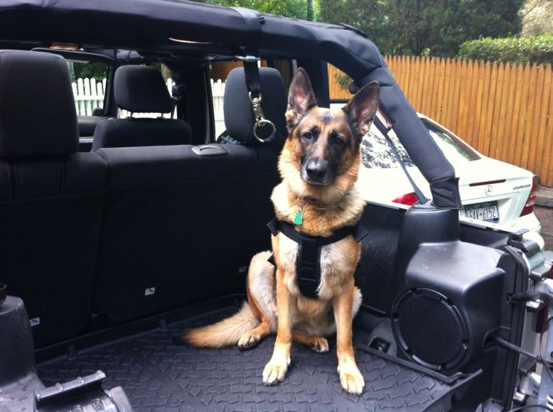 Dog Harness and Attachments Jeep Wrangler Forum For my
