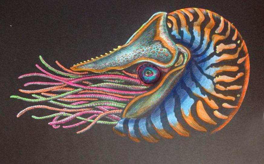 Nautilus By Susan Lowe