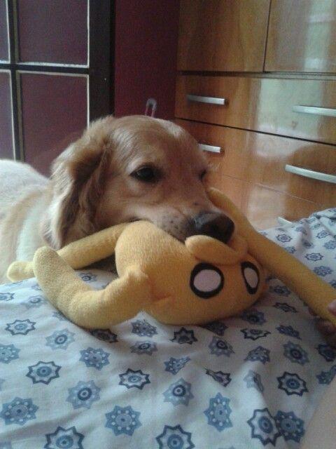 Meu Bolt super cão que amoooo ♥