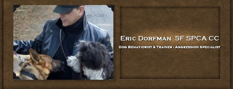 Eric Dorfman Sf Spca Cc Dog Training Dog Behavior Dogs