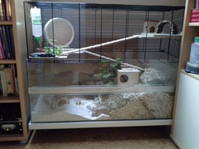Gerbil Cage. Falco Small Pet cage. Love the green and sand