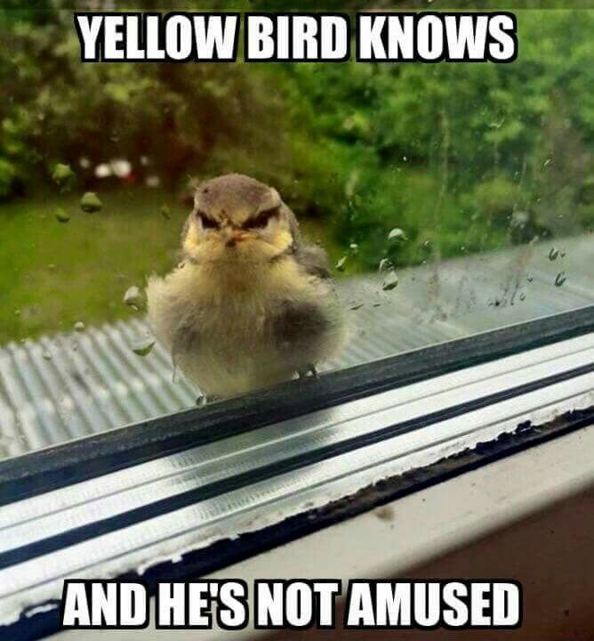 With A Yellow Bill Funny Animal Memes Funny Animals Funny