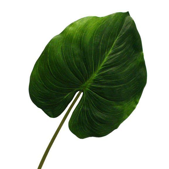 Hübsches Dekoblatt in Grün  - für ein stimmungsvolles Ambiente