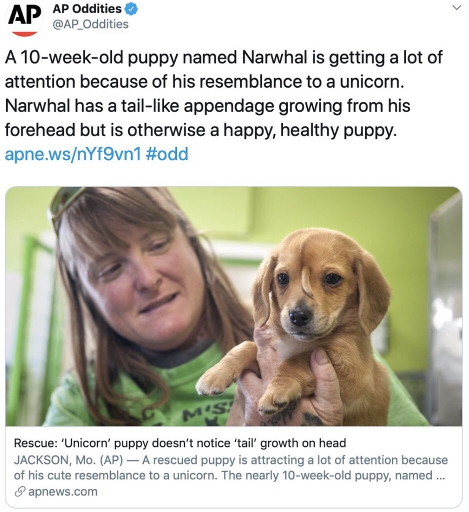 When Do Labs Stop Growing Puppies Healthy Puppy Puppy Names