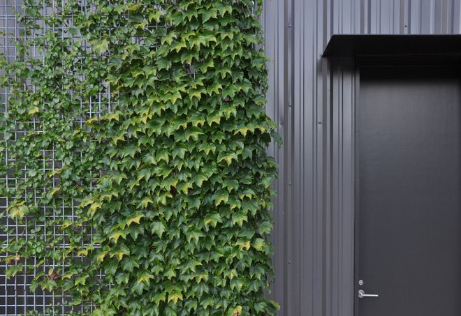 Climbing Foliage With Metal Trellis Industrial Exterior