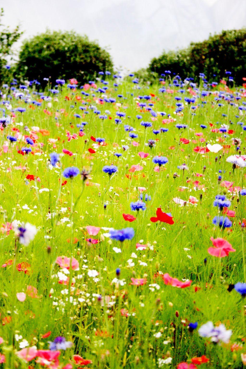 You u me baby pickin wild flowers paisajes y jardines pinterest