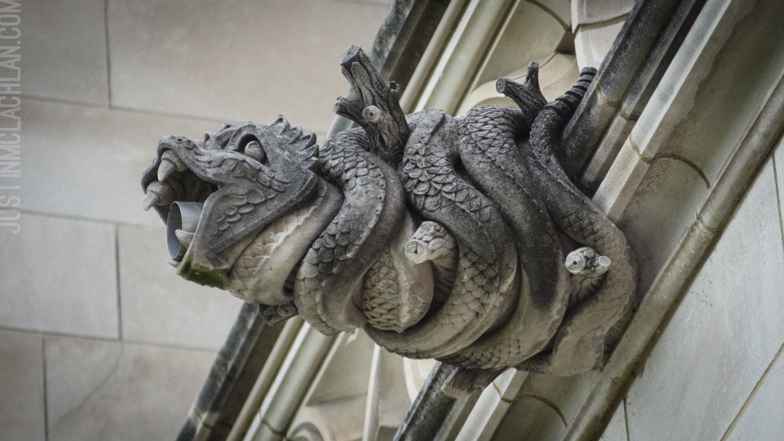 North America also has its fair share of gargoyles They protect many of the older buildings in cities like New York Chicago and Philadelphia