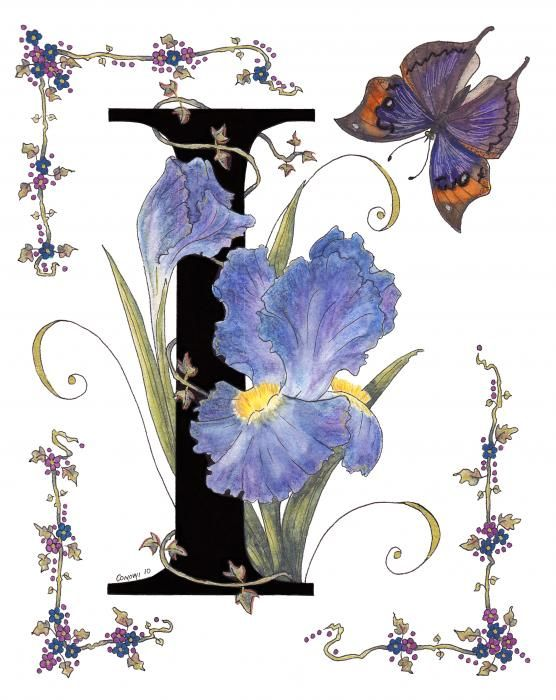 My series of initals for all the letters of the Alphabet, each flower and butterfly name starts with the letter of the alphabet. The Iris stands for Faith, Hope and Wisdom, things it seems that that world is very short of now sadly! Someone stole my painting! :-(