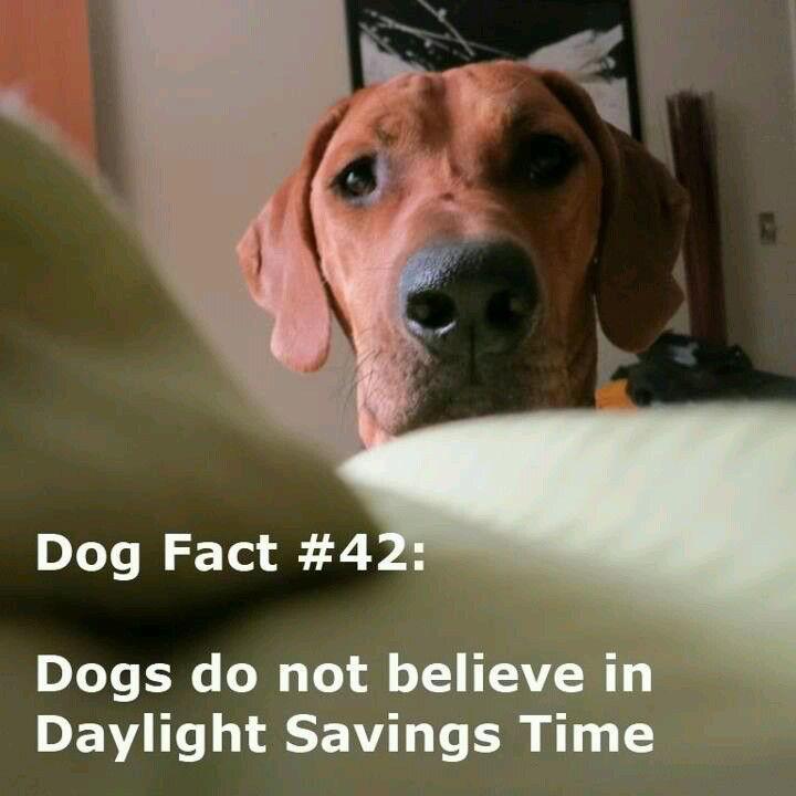 Daylight Savings Time Daylight Savings Time Dog Facts Daylight Savings