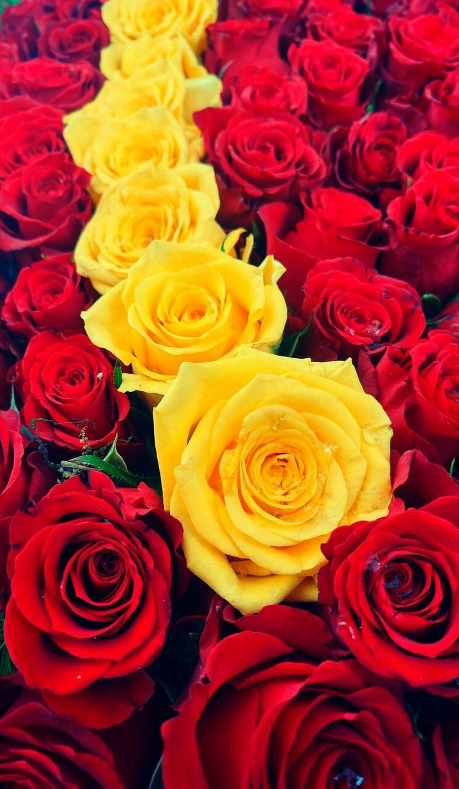 قطــڕة نـــدێ With Images Happy Flowers Nature Images Flowers