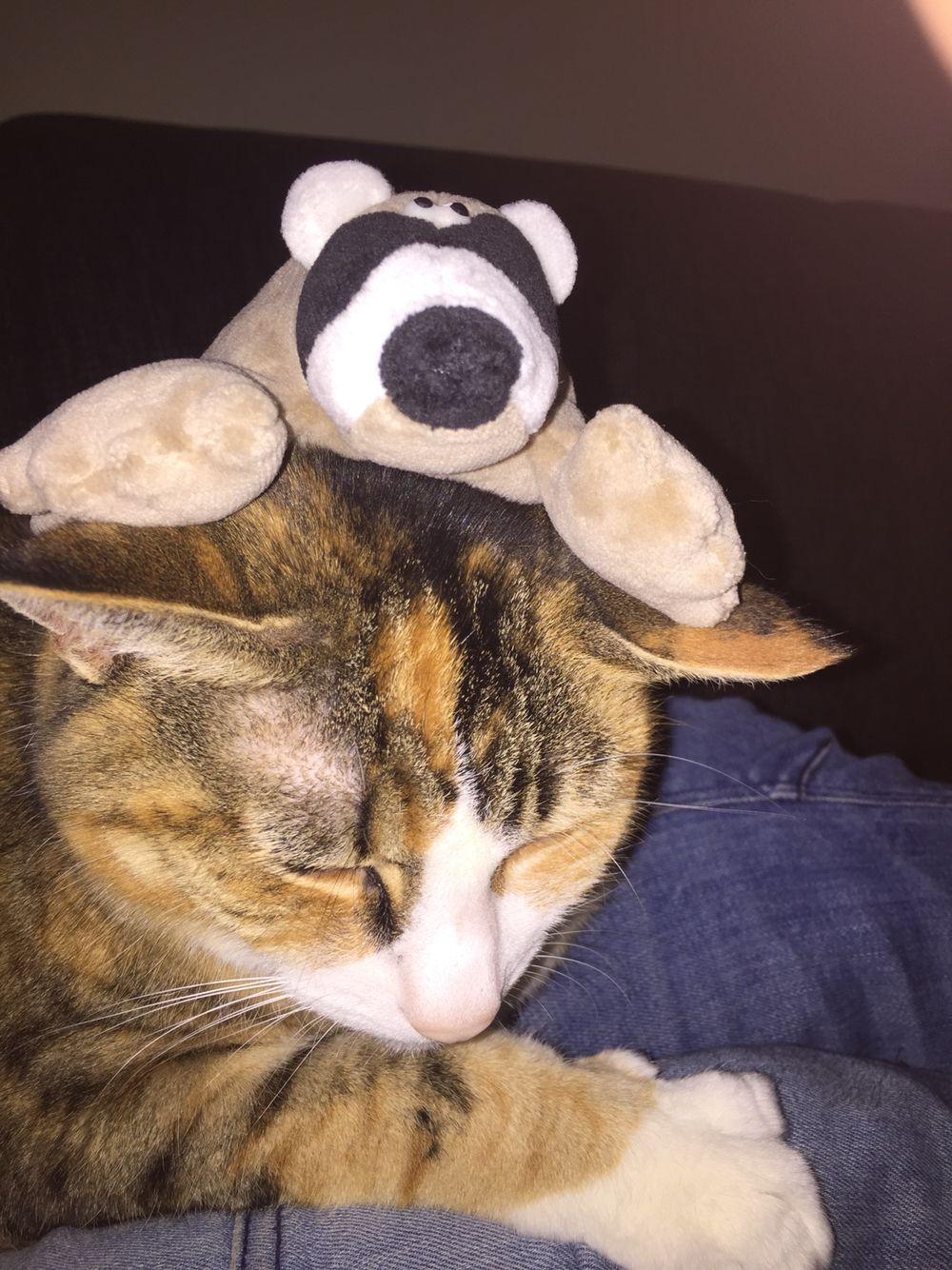 My Cat being cute