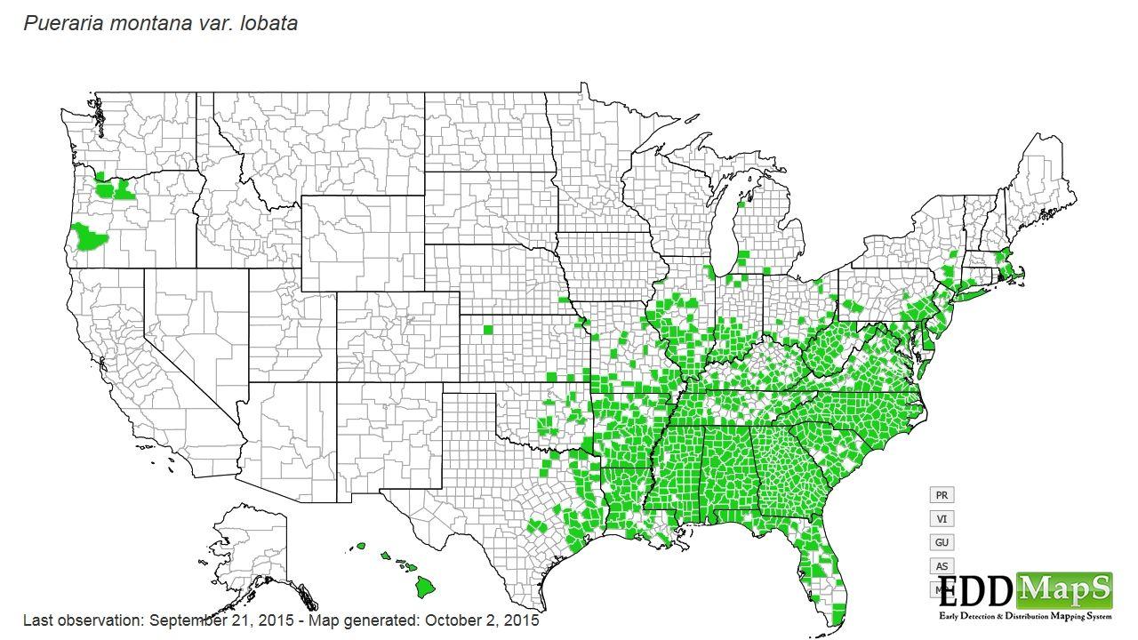 pueraria montana var  lobata - kudzu distribution map