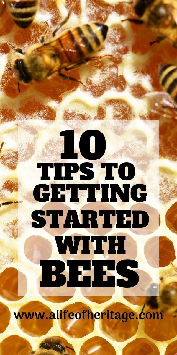 Bees: 10 Tips to Get Started   Bee keeping, Backyard ...