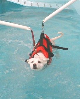 Swimfit Canine Hydrotherapy Dog Daycare Dog Pool Dog Physical Therapy