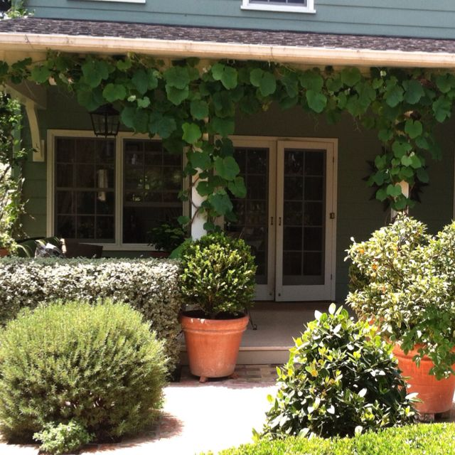 Rogers Red Grape Vine framing the porch at Edna May Garden in Santa ...