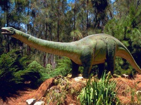 Dinosaurios Herbivoros Espaciociencia Com Herbivoros Dinosaurios Prehistorico En este juego usted alimentará a un dinosaurio que sea vegetariano. dinosaurios herbivoros espaciociencia