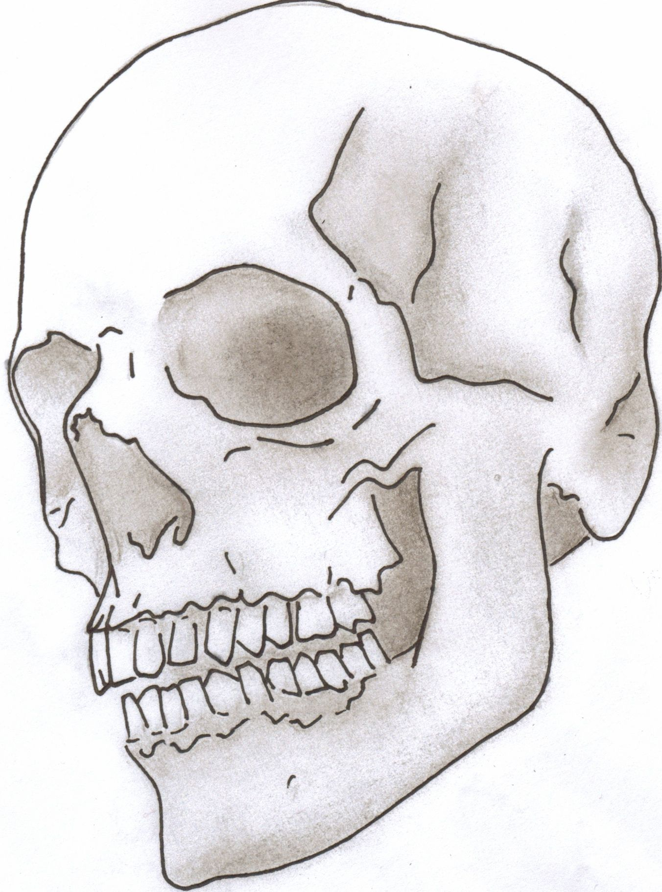 Skull Line Drawing Easy : Skull drawing google search things