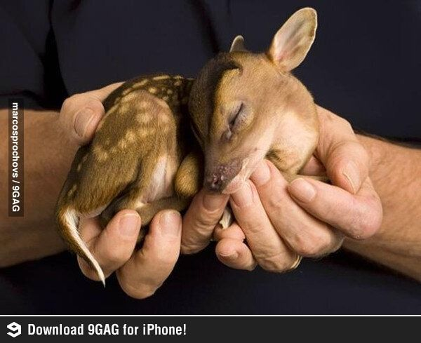 This is what a baby deer looks like
