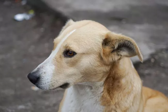SPCAI Hundreds Of Dogs And Puppies Live In Chernobyl