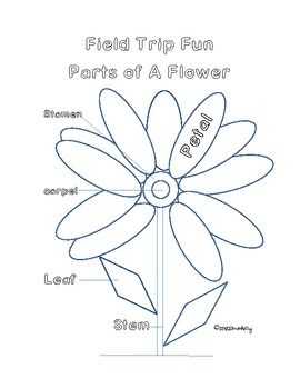 Field Trip Fun Parts of A FlowerColoring Activity Sheet for