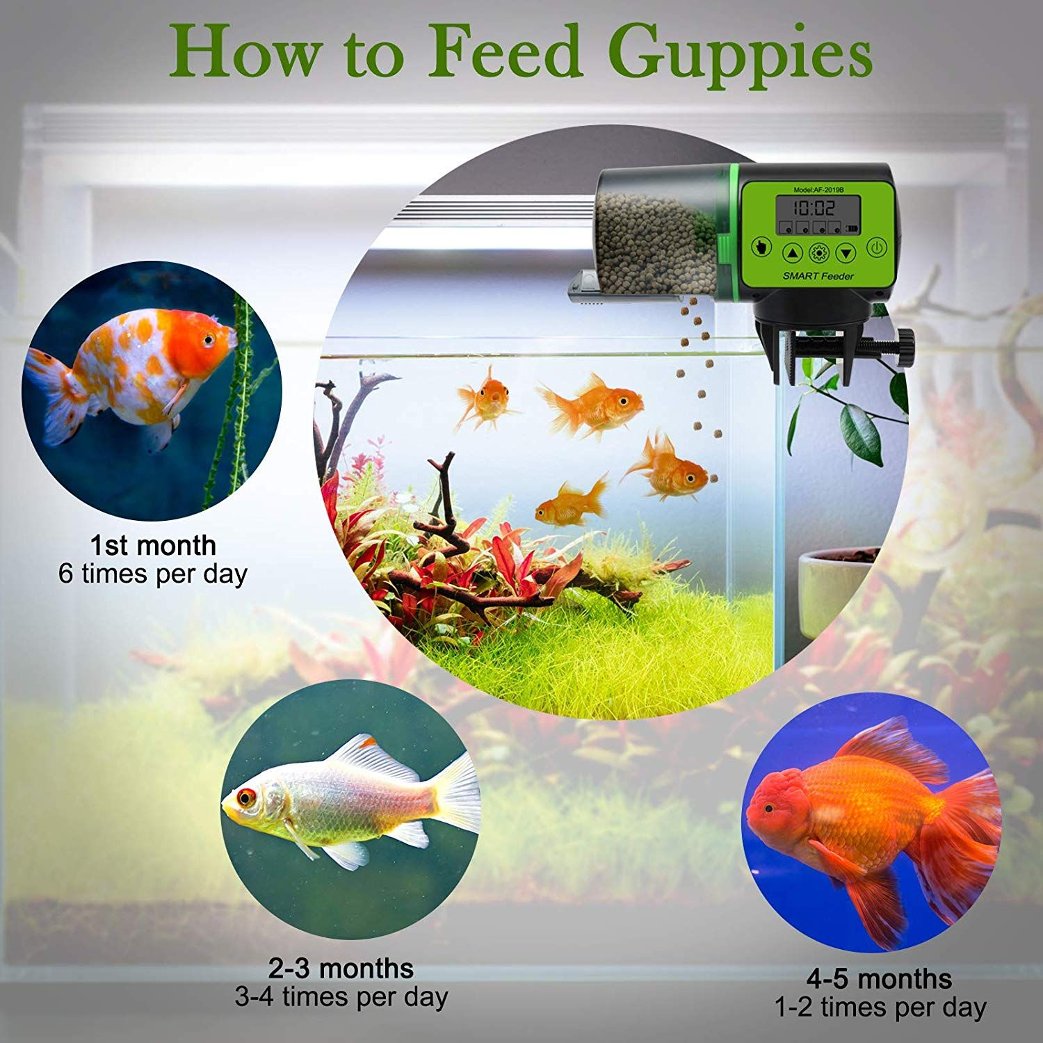 Large Capacity 200ml Fish Food Dispenser Large 200ml Capacity Of The Automatic Fish Feeder Is Suitable For Various Fish Foods Such As Flakes Pellets Powders A