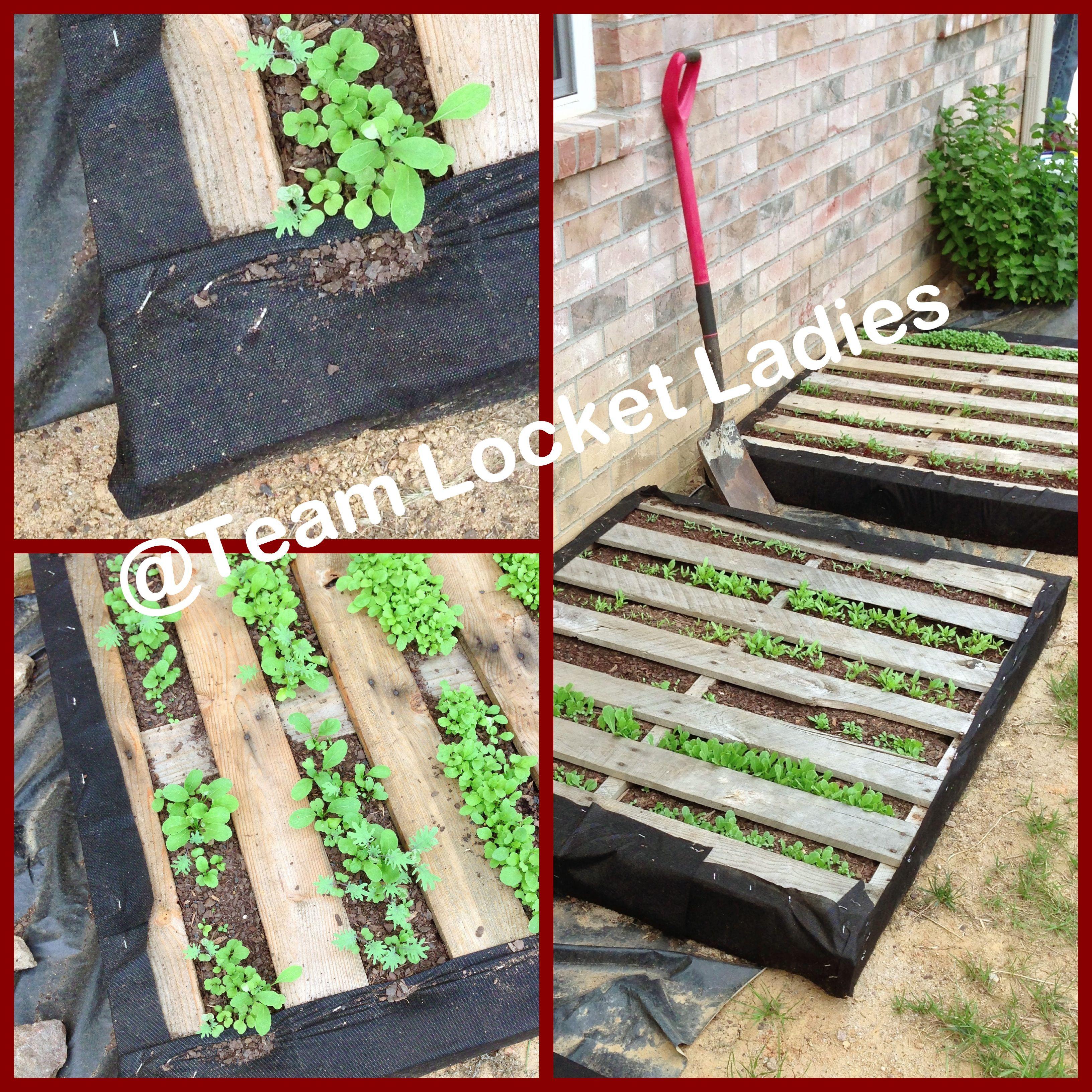 Pallet gardening for salad greens