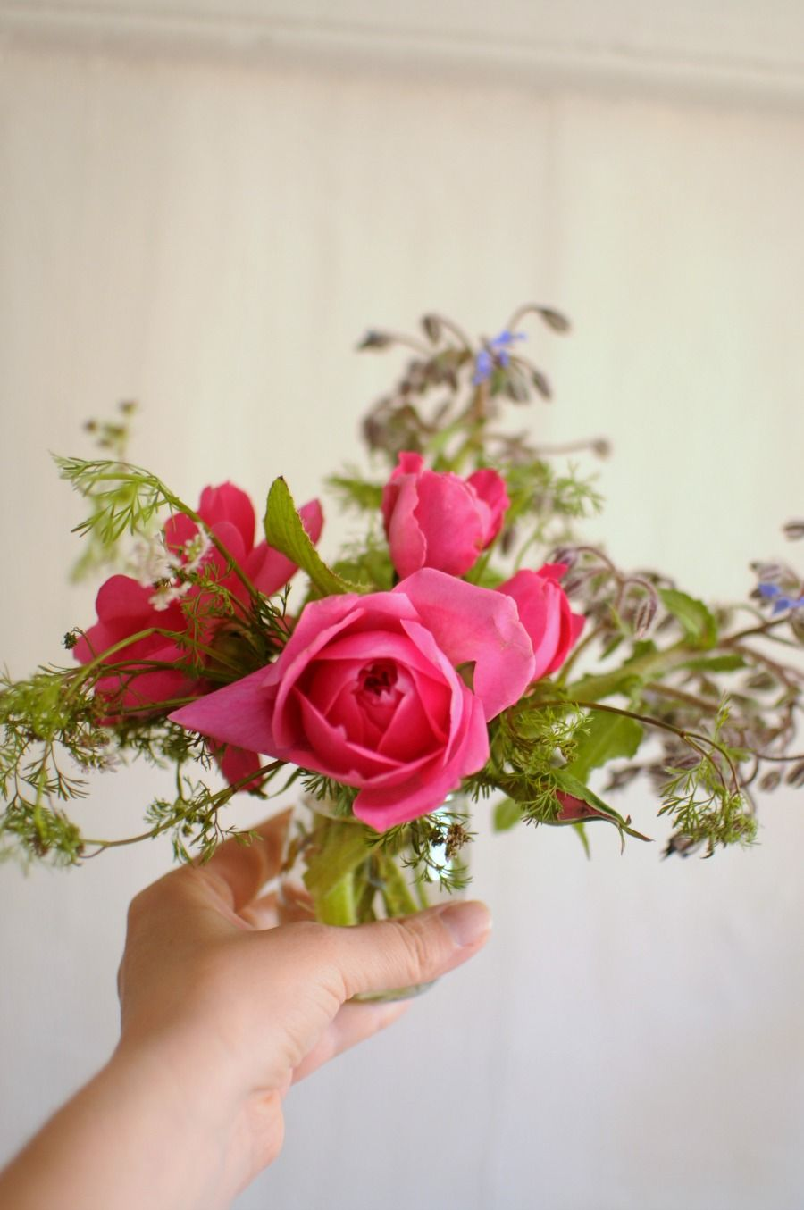 Do your roses die as soon as you bring them home? Learn how to bring ...