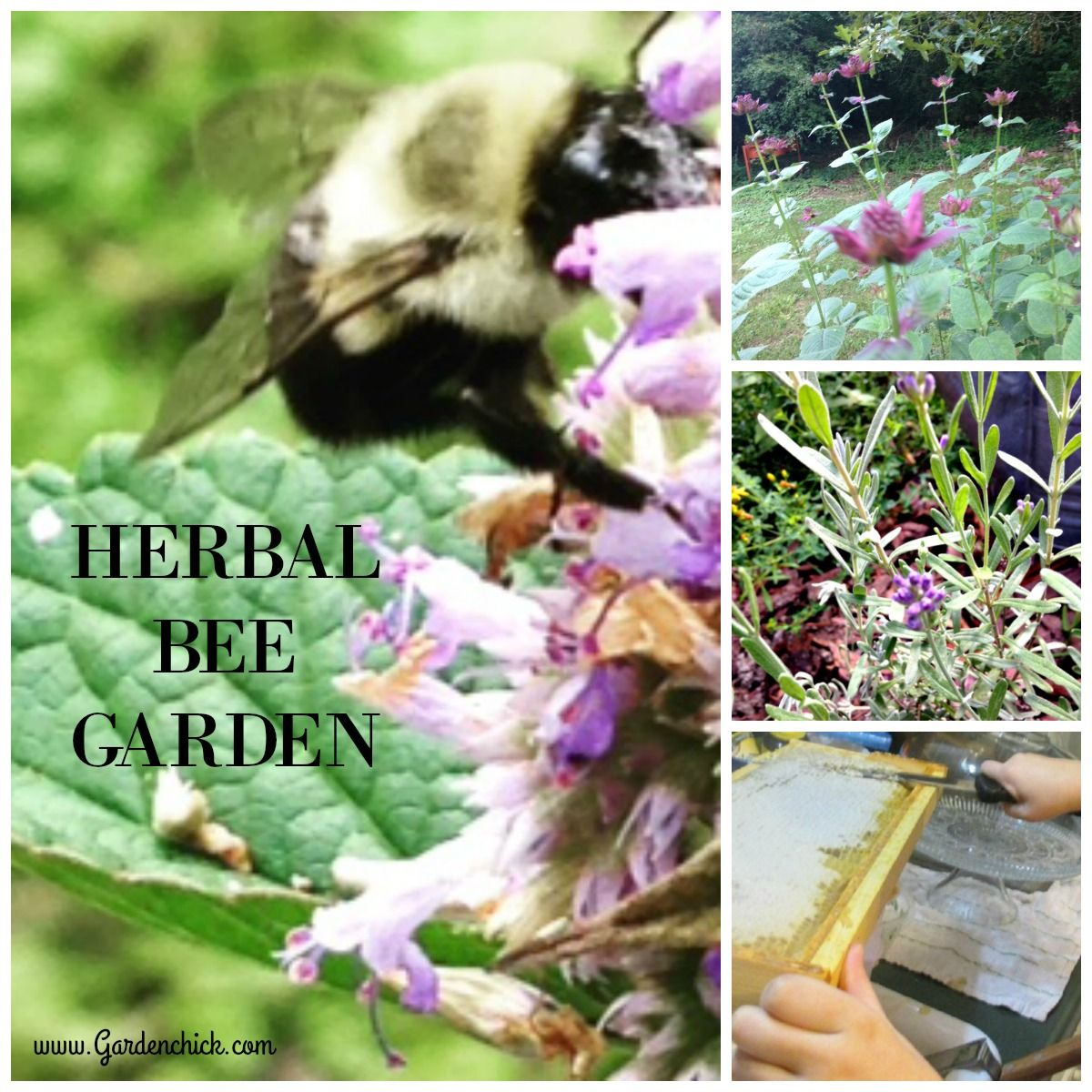 Keeping bees? Plant herbs to provide nectar and pollen. https://wp ...