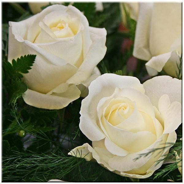 Rosas rojas y blancas significado buscar con google - Significado rosas blancas ...